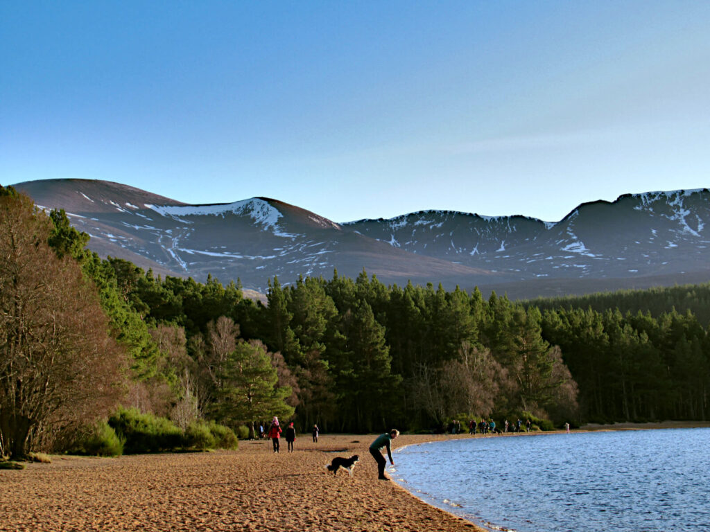 In the foreground is golden sand meeting with the loch water. A person and their dog are on the edge of the water. The beach is lined with thick evergreen trees and the land quickly lifts up into mountains, which are covered in snow. The sky is blue and there is not a cloud in sight.